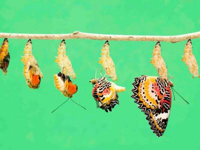 6 Hewan Ini Ternyata Mengalami Daur Hidup Metamorfosis