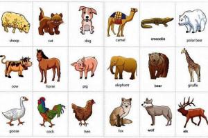 160 Nama Hewan Dalam Bahasa Inggris Dari A Z