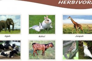 Penggolongan Hewan Berdasarkan Jenis Makanannya Herbivora Karnivora Omnivora