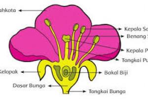 Bunga Sempurna Pengertian Bagian Bagian Dan Contoh