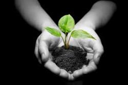 Jenis Tumbuhan yang Cepat Tumbuh dan Bisa Dipanen dalam Waktu Singkat
