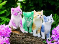 6 Rahasia Kucing Yang Jarang Diketahui Orang Banyak
