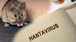 Fakta Mengejutkan Hantavirus Di China, Disebut Lebih Berbahaya Dari Corona