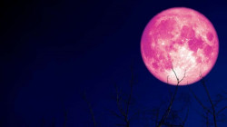 Fenomena Bulan Purnama 'Strawberry Moon' Bakal Datang 5 Juni. Jangan Sampai Kelewatan ya!