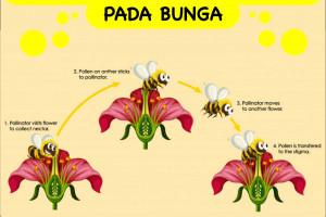 Penyerbukan Dan Pembuahan Pada Bunga