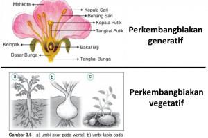 Pengertian Perkembangbiakan Vegetatif Dan Generatif Pada Tumbuhan