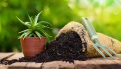 Kenali Kondisi Kompos yang Baik untuk Diberikan ke Tanaman