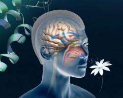 Fakta Anosmia, Gejala COVID-19 yang Ganggu Indra Penciuman