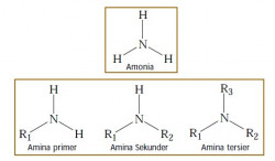Pengertian, Rumus Umum dan Jenis-jenis Senyawa Amina