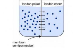 Tekanan Osmosis (Pengertian, Rumus, Proses Terjadi, dan Contoh)