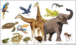 Apa Perbedaan Reptil dan Mamalia?