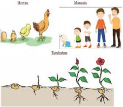 Perkembangan Dan Pertumbuhan Makhluk Hidup